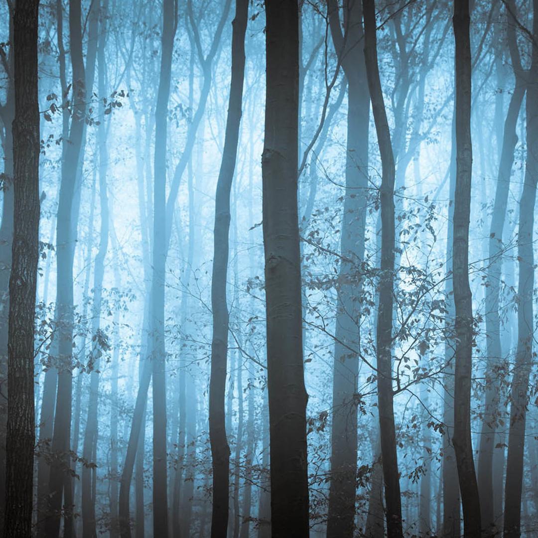 stencil.blue-tree